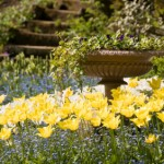 How to Create a Memorial Garden