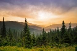 Peaceful nature scene