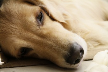 Sympathy Card Messages for Pets