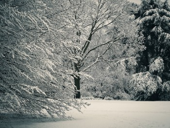Planning a Winter Funeral