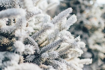 Is Winter the Best Time to Pre-Plan a Funeral?