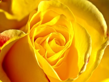 Funeral Flower Colors and Their Meanings