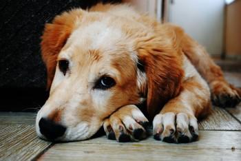 Ways to Grieve Pets