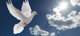 Why it Matters: Dove Releasing and Other Funeral Ceremonies