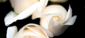 Funeral Planning How-To: Getting Ready to Send Sympathy Flowers