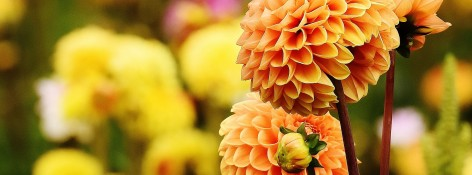 Funeral Ideas for Mom