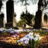 Pros and Cons of Side-by-Side Burial Plots